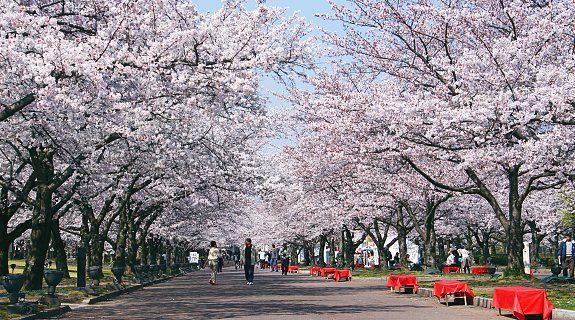 cherry-blossom-forecast-2015-february-sakura-2